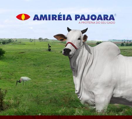 amireiapajoara00